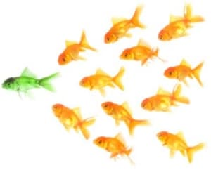 Leadership Development – The Real Deal
